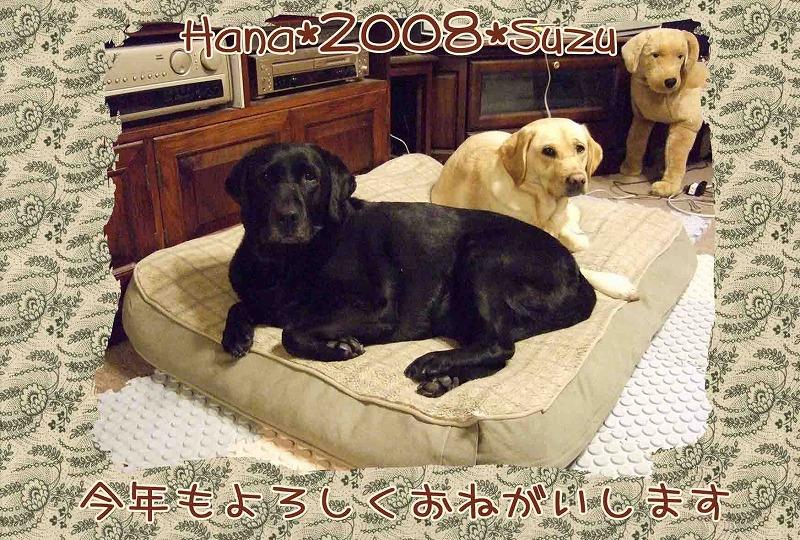 Hana2008suzu