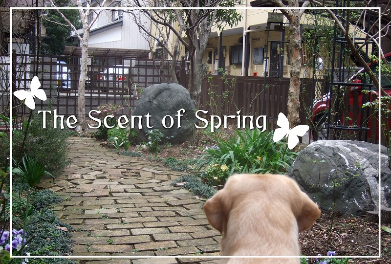 The_scent_of_spring