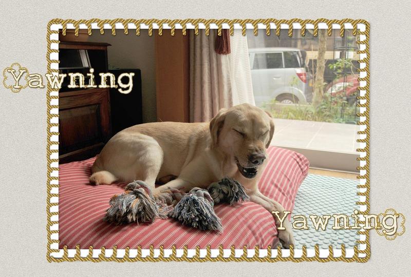 Yawning2