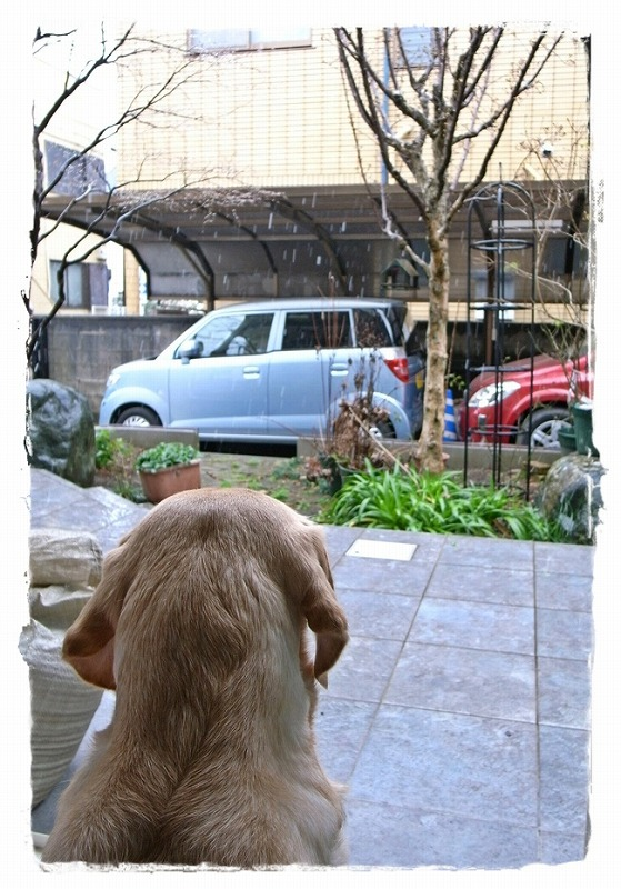 Suzu_watching_the_snow